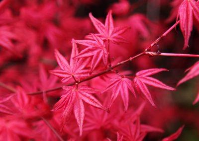 autumn-16055_960_720
